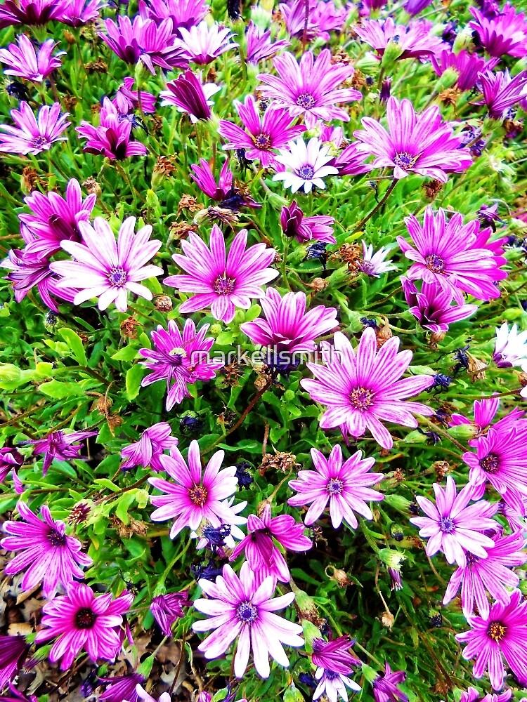 Lavender in the Garden by markellsmith