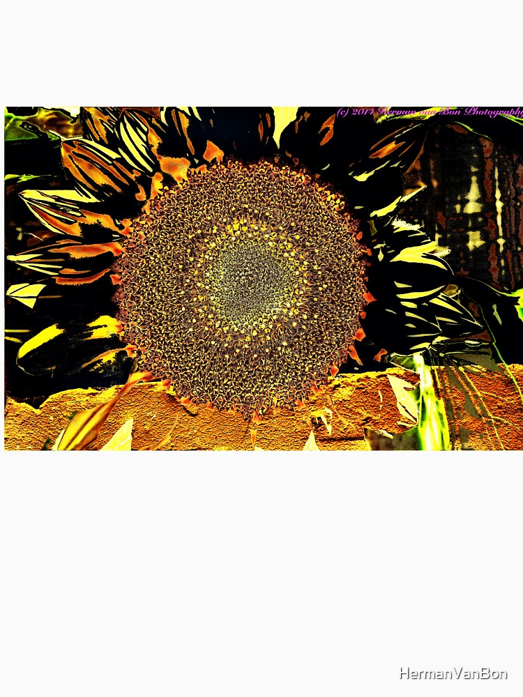 Sunflower by HermanVanBon