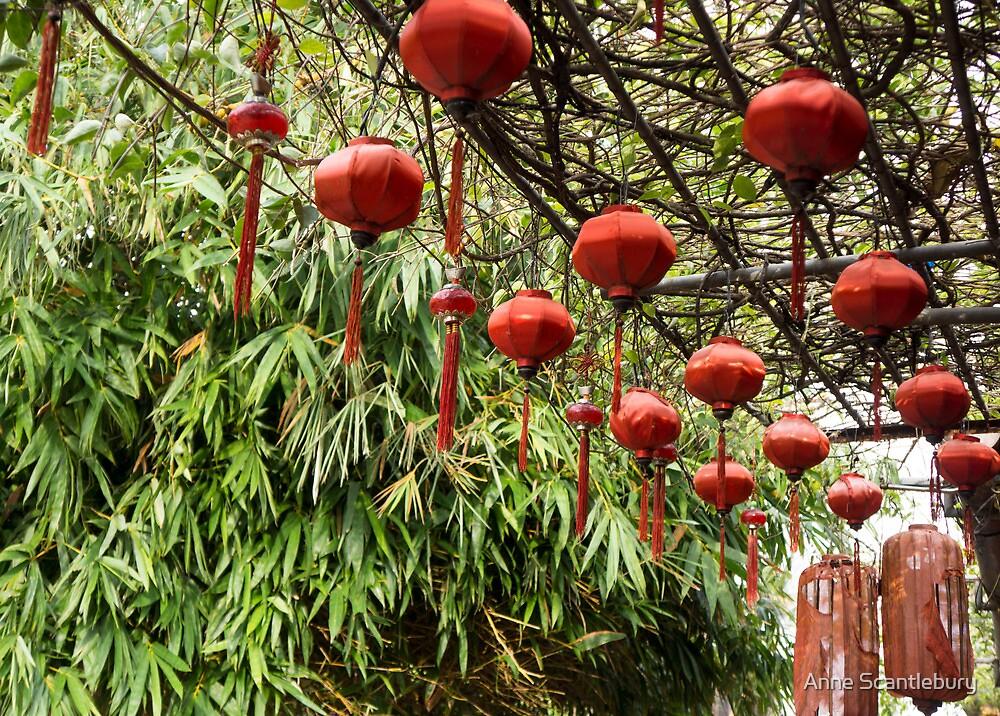 orange lanterns by Anne Scantlebury