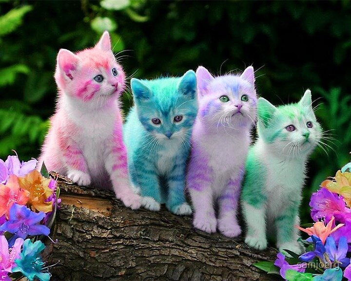 Colorful Cats by samjoerg