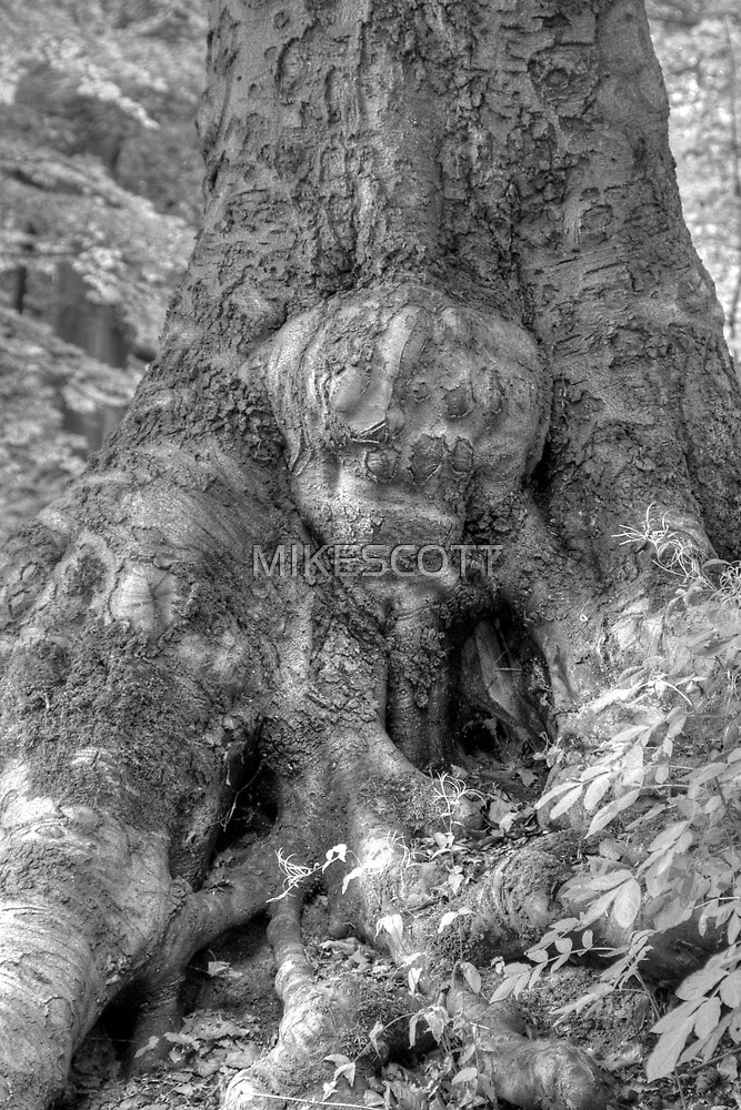 THE MAN IN THE TREE by MIKESCOTT