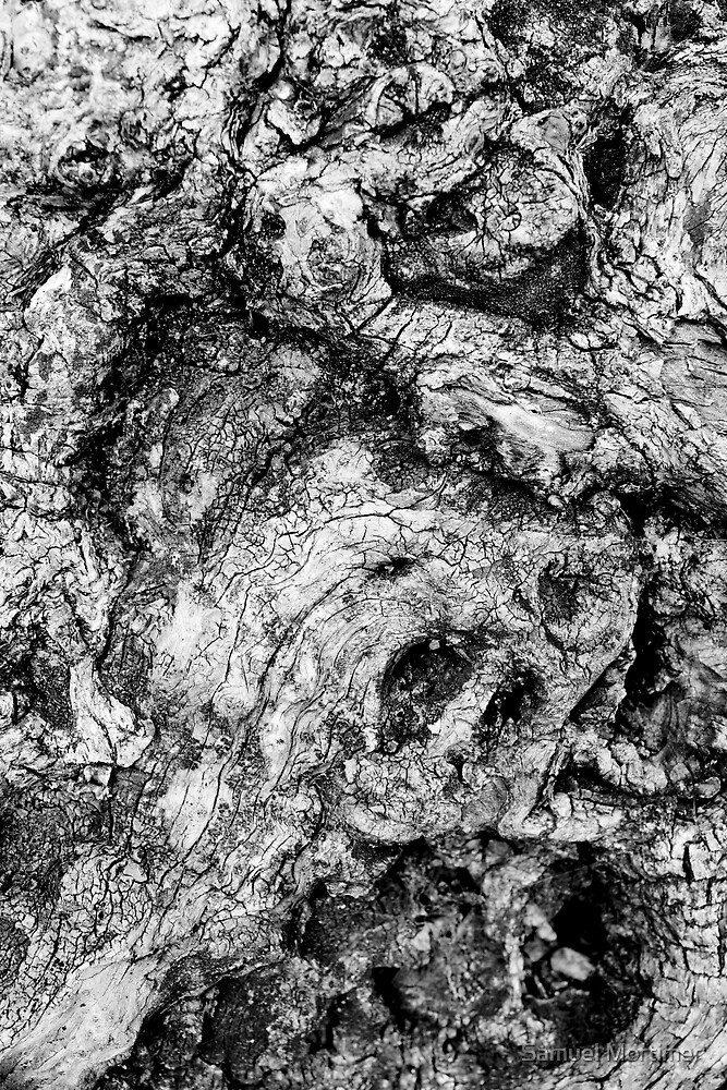 A Study of Wood by Samuel Mortimer
