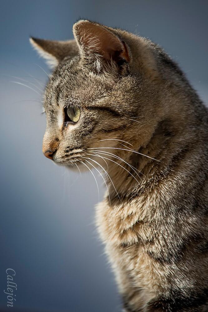 Cat portrait blue by JOSECALLEJON
