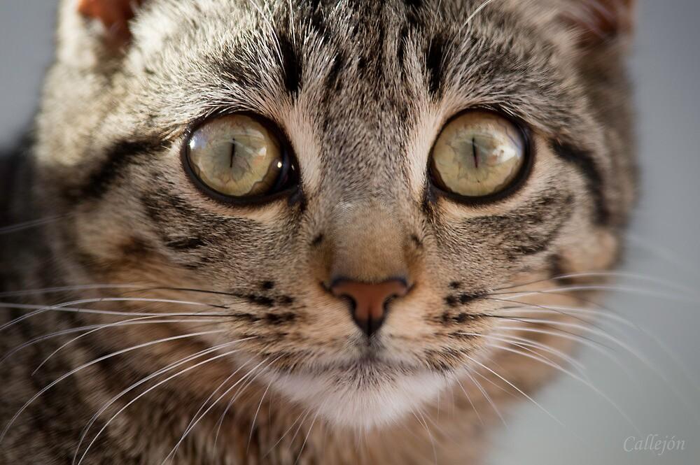 Cat surprise by JOSECALLEJON