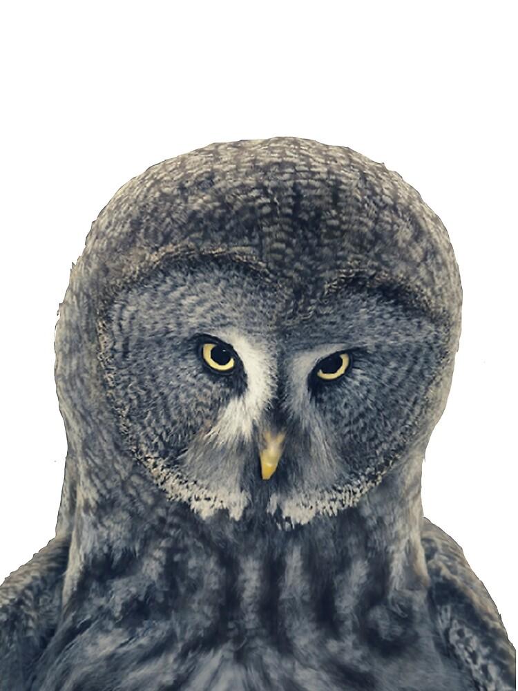 Curious owl by Neruru