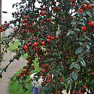 Red Berries by Whiteside-Art