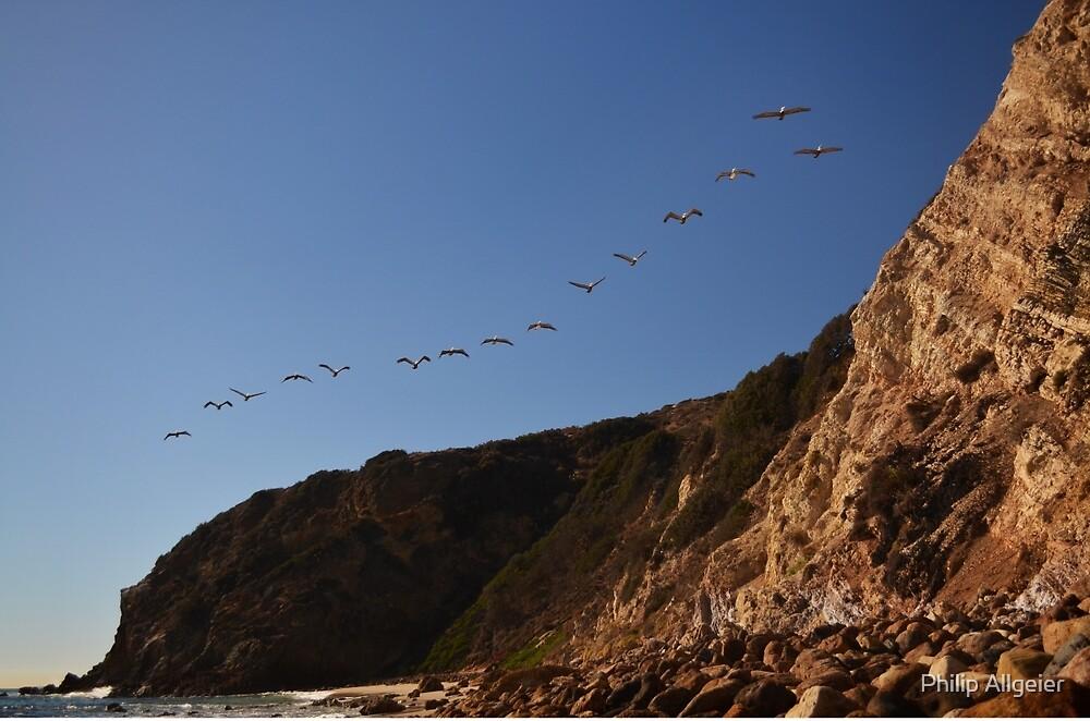 Point Dume Pelicans by Philip Allgeier