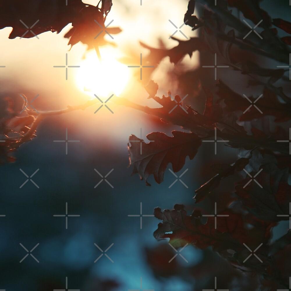 Oak Leaves in Winter Solstice Sunset  by tanjica