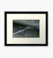 The Patient Arachnid Framed Print