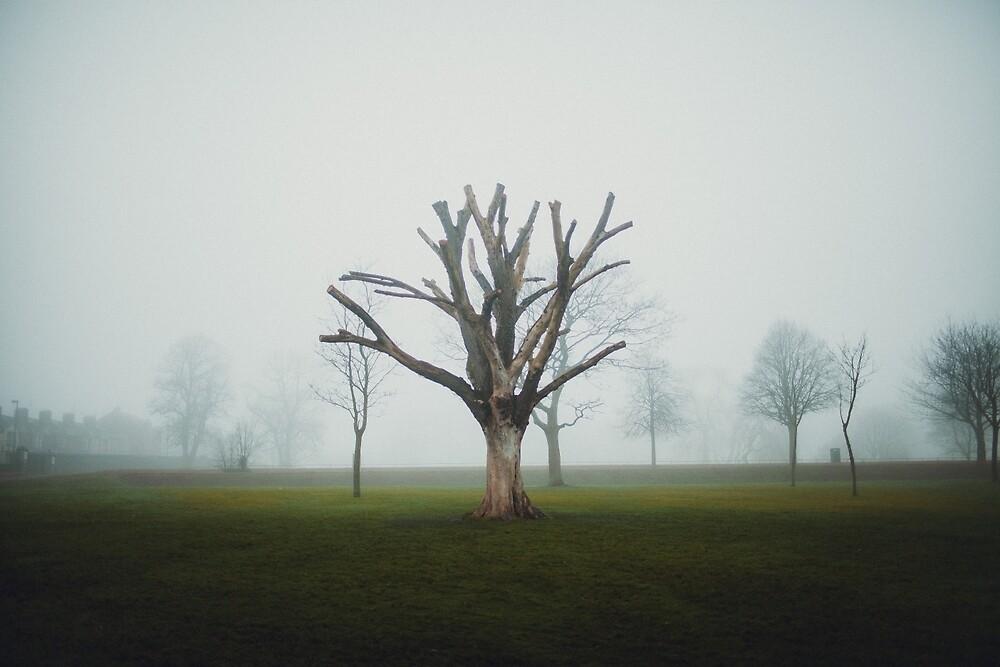 Dead Tree in Fog  by wipphotography