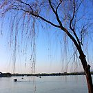 A Tree Leans Over Kunming Lake by katy fotography