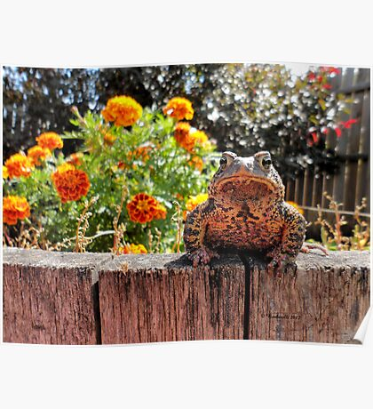 Adorable Toad with little orange flowers 2 Poster