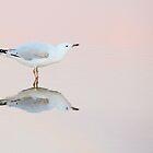gull ripple by Georgie Hart
