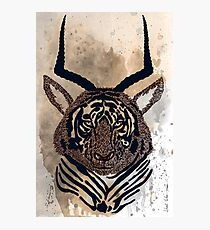 Tiger - antelope Photographic Print