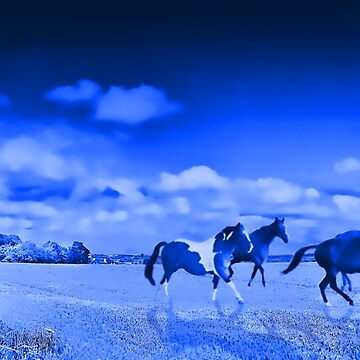 Wild horses by johnlynchstudio