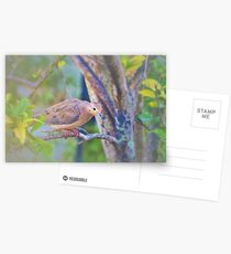 Sweet and gentle dove Postcards