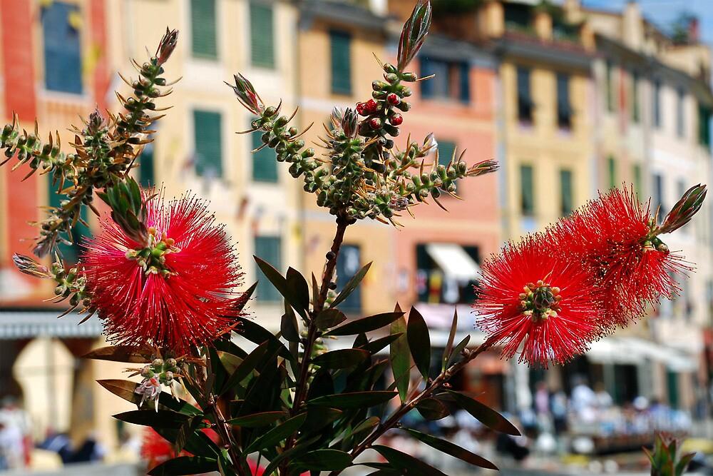 Flowers in Portofino - Italy by Arie Koene