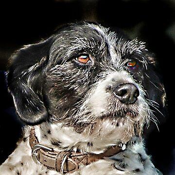 Terrier by johnlynchstudio