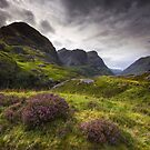 Scotland - Glencoe Heather by Angie Latham