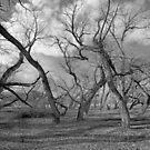 Tree people by SB  Sullivan