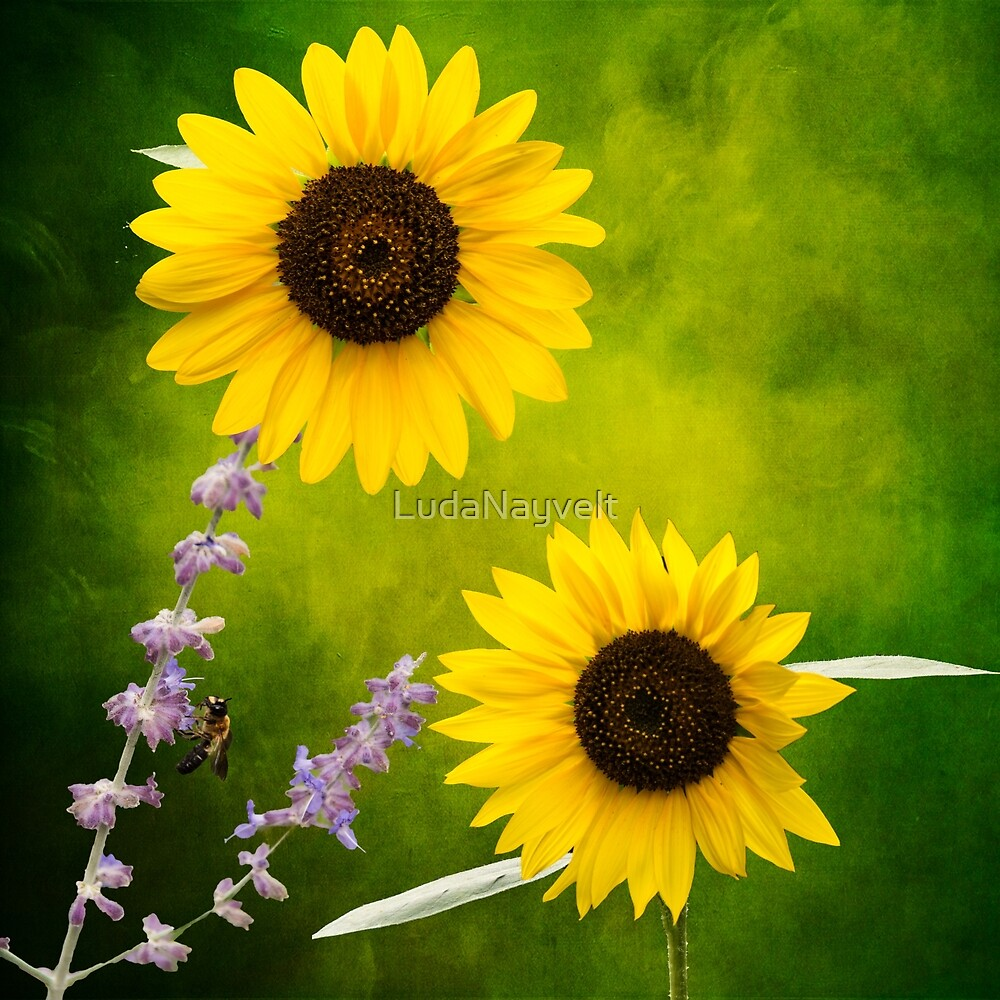 Sunflowers  by LudaNayvelt