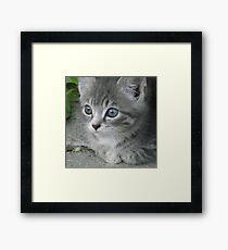 Wiskers Framed Print