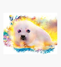 curious seal Photographic Print
