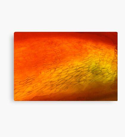 hot & frozen Canvas Print