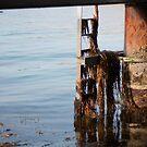 Under the Pier by Jenni Greene