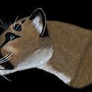 Cougar Portrait by Walter Colvin
