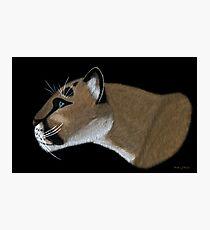 Cougar Portrait Photographic Print