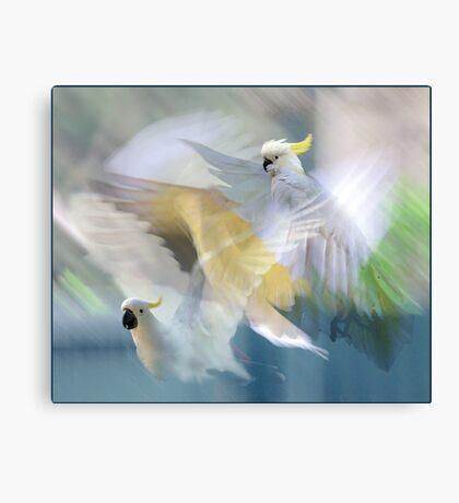 sulphur-crested cockatoos in flight Canvas Print
