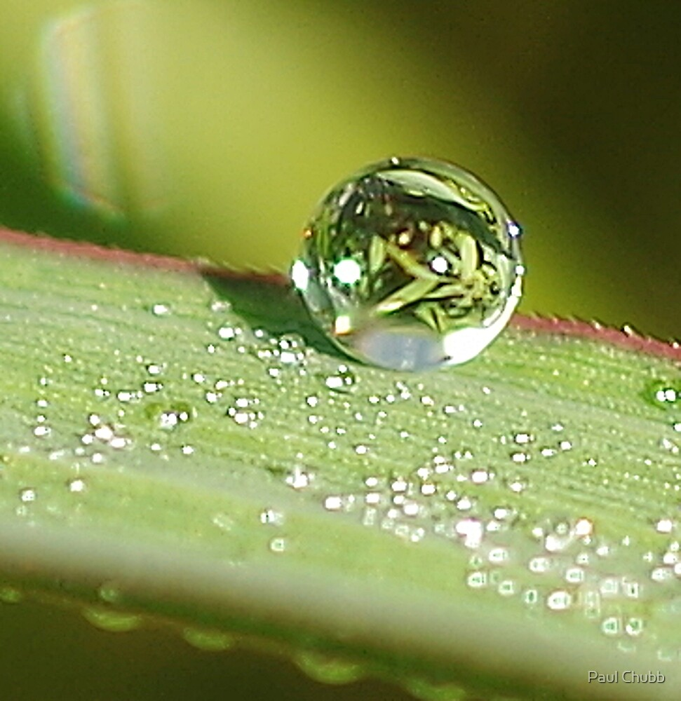 Dew Drop by Paul Chubb