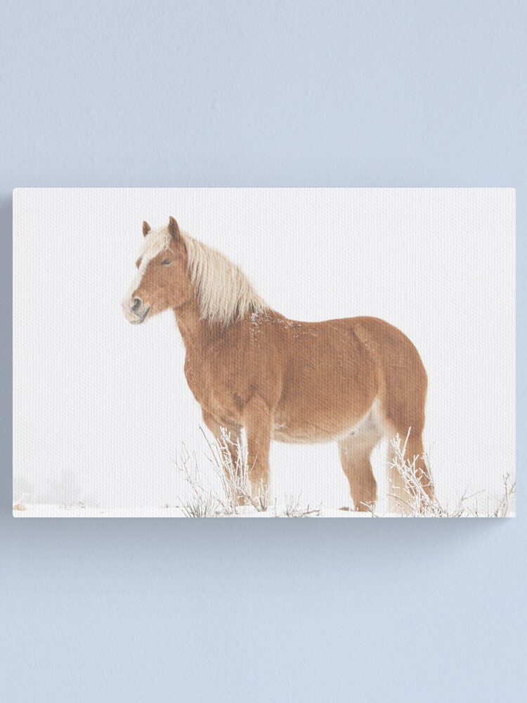 Alternate view of Smiling Palomino Horse in the Snow Canvas Print