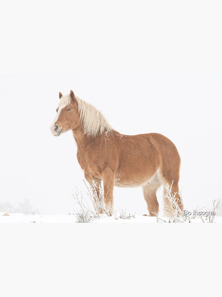 Smiling Palomino Horse in the Snow by mrbo