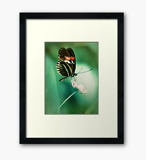 Red and black butterfly on white flower Framed Print