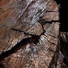 Wood by Martyn Franklin