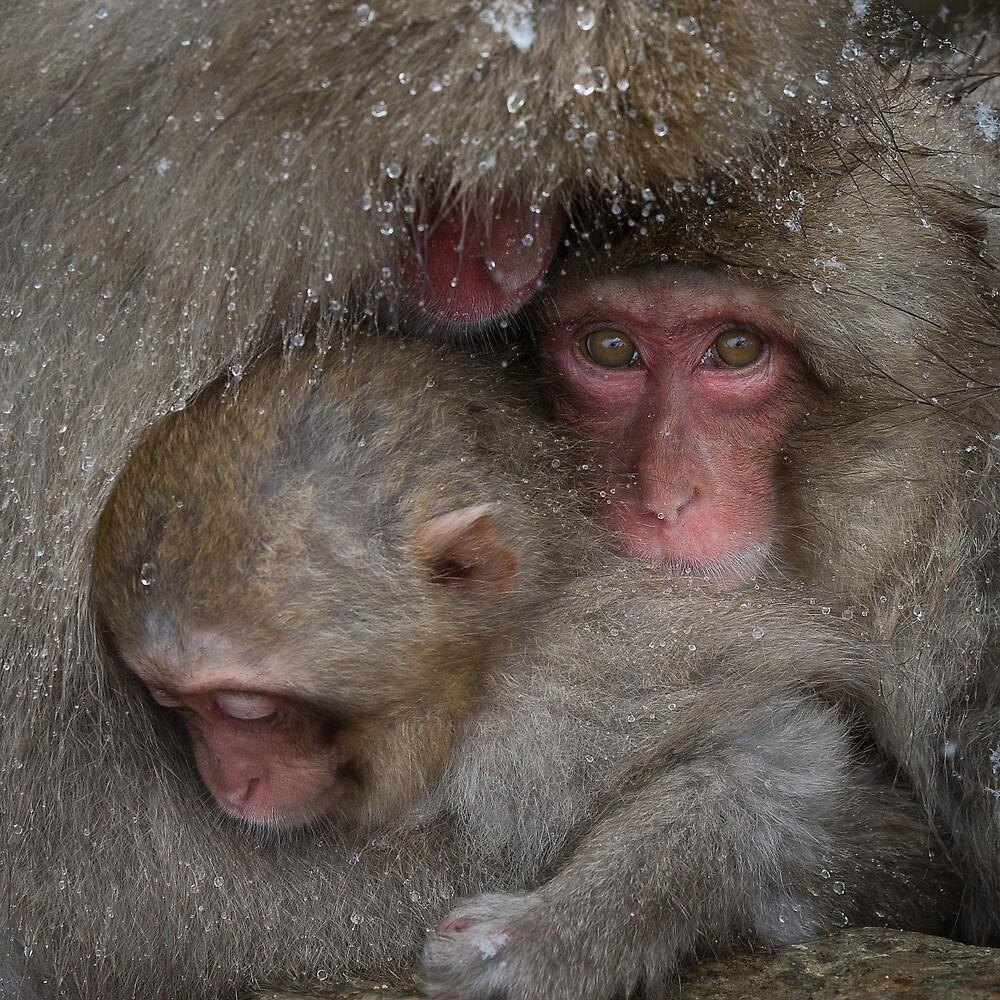 Warm with Mother by Robert van Koesveld