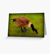 Duck down... Greeting Card