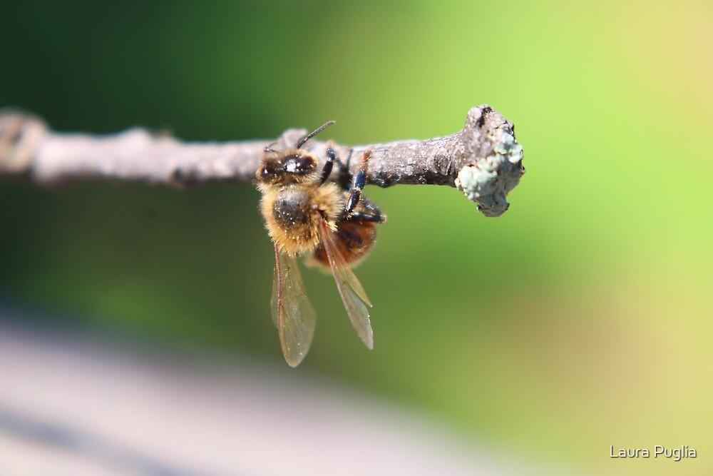 Honeybee by Laura Puglia