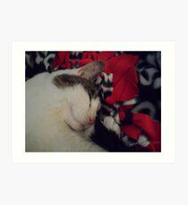 Snuggle Kitty Art Print