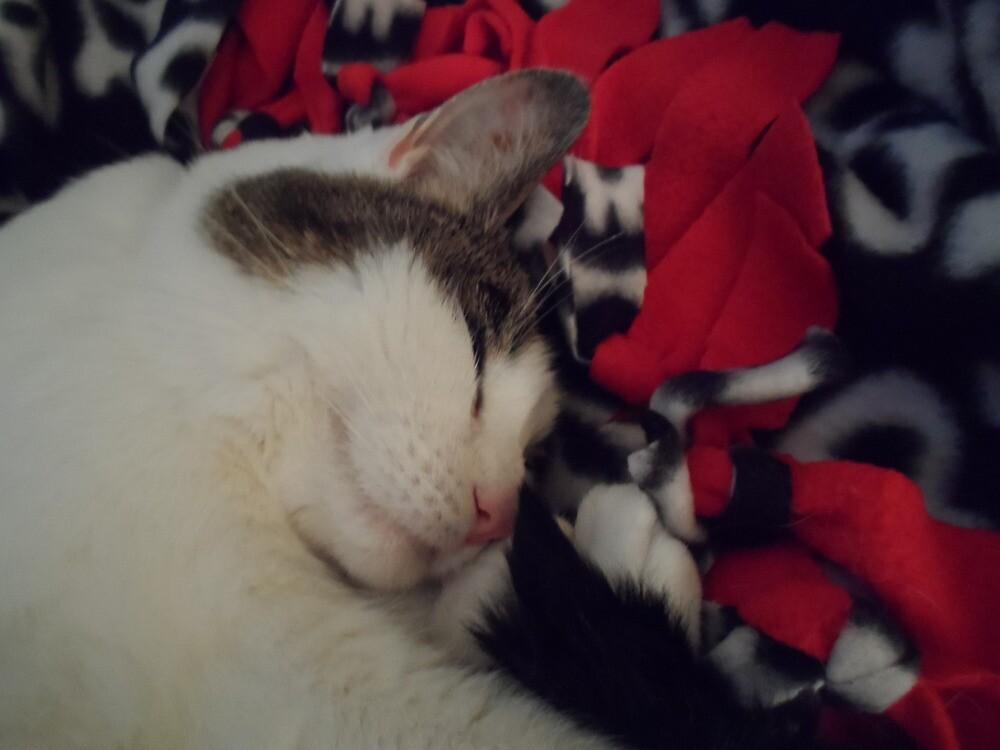 Snuggle Kitty by Hikaru2322
