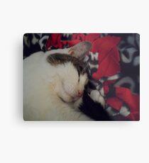 Snuggle Kitty Metal Print