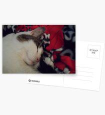Snuggle Kitty Postcards