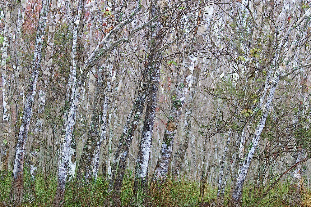Messy Woods by Eileen McVey