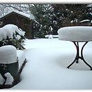 A Backyard by Larry Llewellyn
