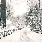 Snowy Path -  Central Park - New York City by Vivienne Gucwa