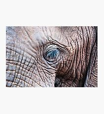 The Elephant Sanctuary 02 Photographic Print