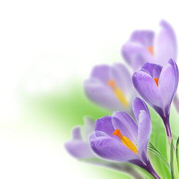 Flowers - Lilac - 1 by Argos1