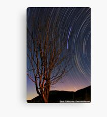 tree star Canvas Print
